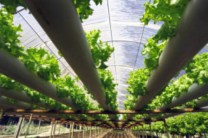 Essential 4 Tips for Better Yields Growing Indoors