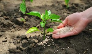 How to Properly Use Nutrients for the Best Quality Crops