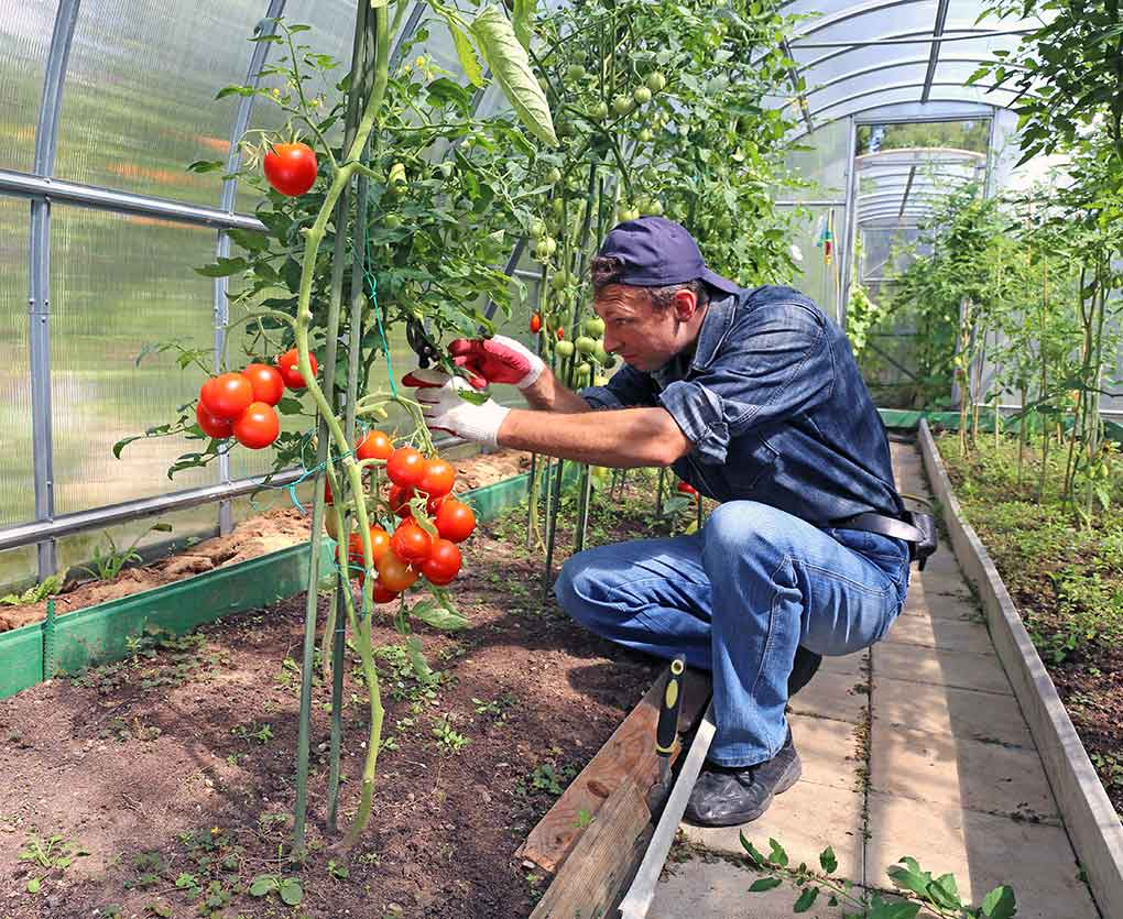 Pruning for Bigger Yields