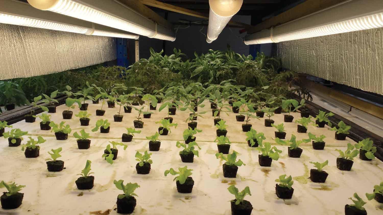 LED grow light over seedlings