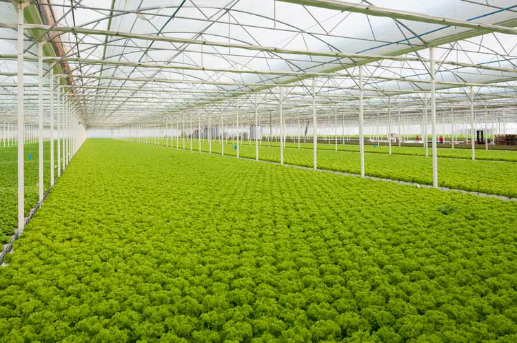 Commercial Greenhouse Equipment Supplier