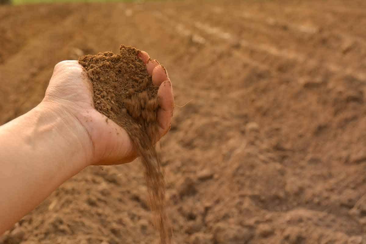Humic Acid Makes the Soil More Fertile for Bigger Yields