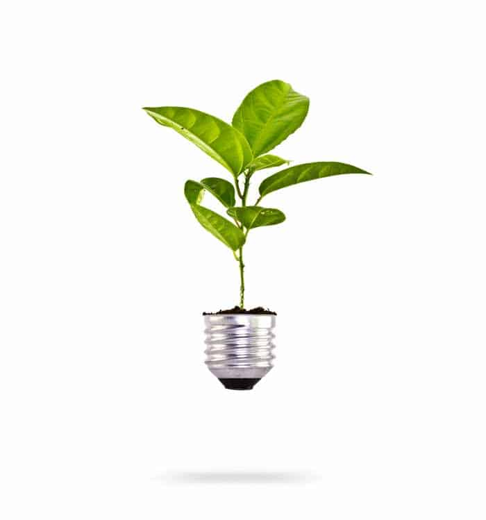 Plant Growing from Light Bulb Wholesale Hydroponic Equipment and Supplies