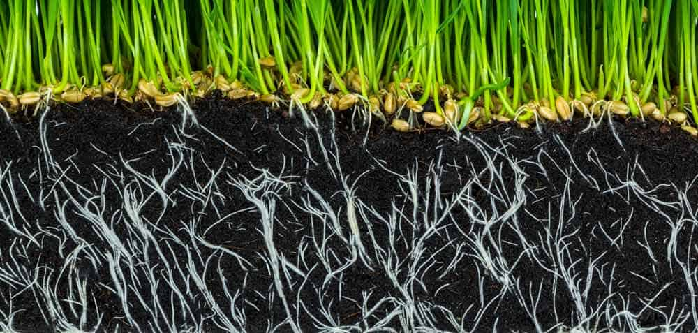 roots growing in fertile soil loaded with humic and fulvic acid