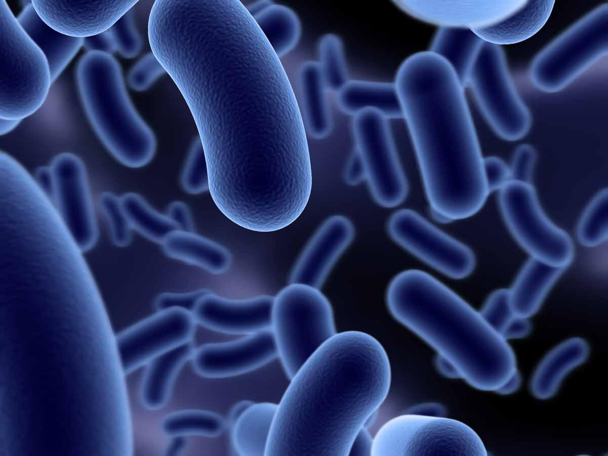 Bacillus amyloliquefaciens Biostimulant Beneficial Bacteria