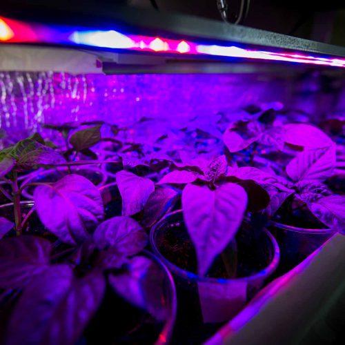 led-grow-light-over-plants