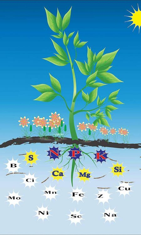 plant-elements-of-nutrients